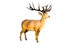 6' Life Like Red Stag